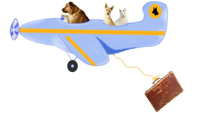 Over Half the Pets That Died On Airplanes Last Year Flew Delta