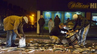 Belfast To Its Citizens: Please Stop Eating Nasty-Ass Road Fish