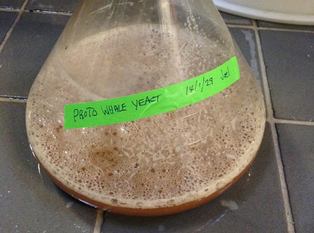 This Paleo Beer Is Made With Yeast From a 35 Million-Year-Old Fossil