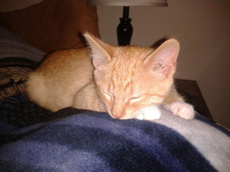 Update to my sick kitty post.