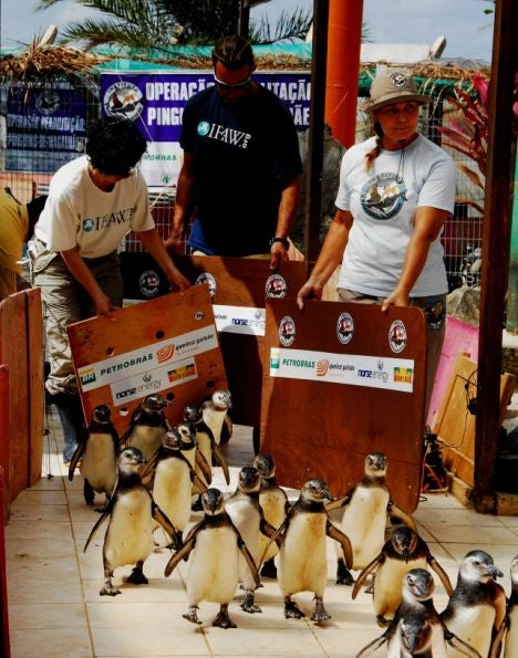 Penguins Flying in Military Planes from Brazil's Beaches to the South Atlantic