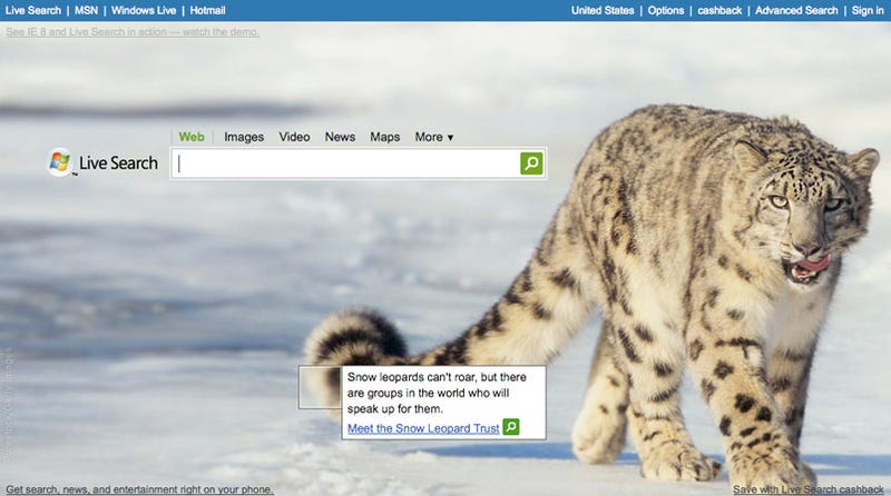 Why Is There a Snow Leopard On Microsoft's Live Search?