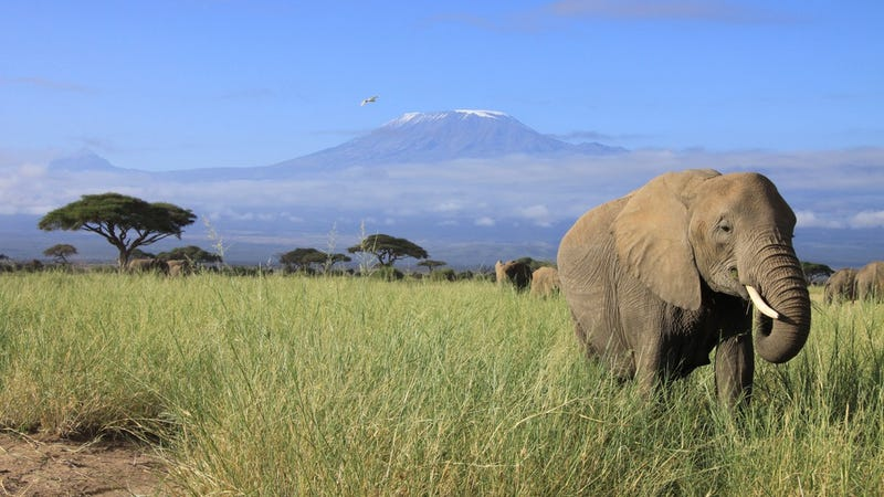 SMS Could Save Endangered Animals in Kenya