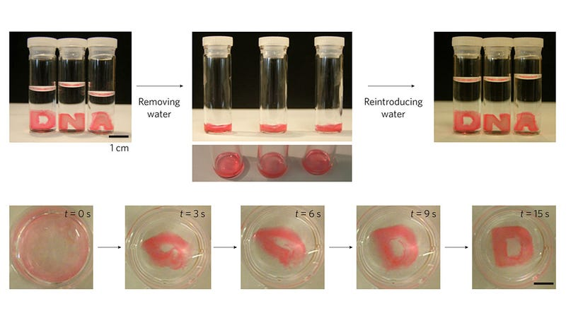 Shape-Remembering Hydrogels Are the First Step Towards a Real-Life T-1000