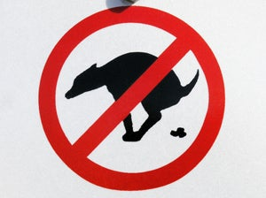 DNA Kits Now Used to Track Illicit Dog Crap