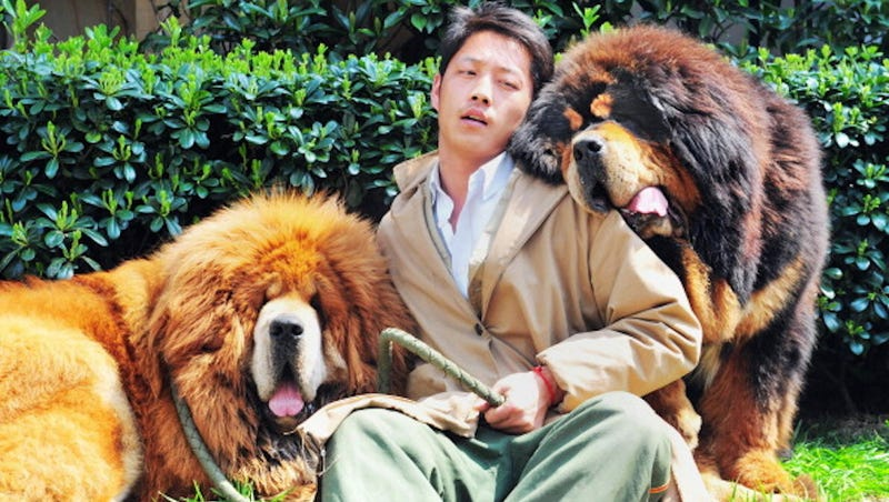This Is the Most Expensive Dog in the World