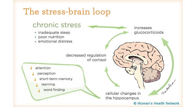 How Stress Breaks Down Your Mind and Body (and How to Fight Back)