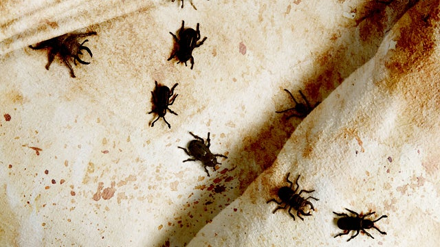 How fungus could help us win the war on bed bugs