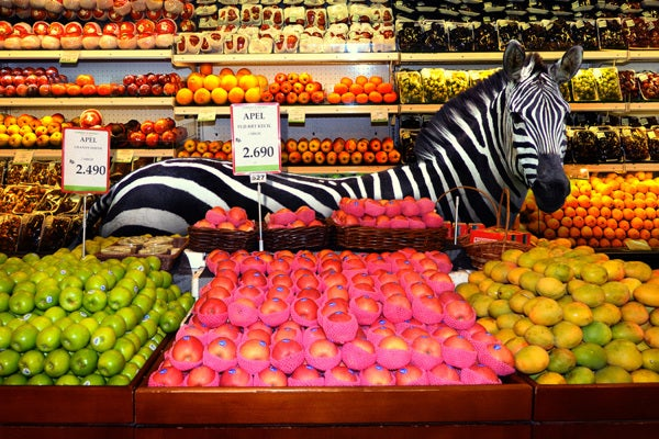 Photographs of wild animals in our natural environment: the Supermarket