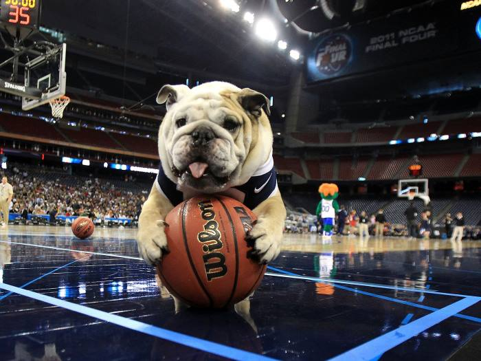 A Horrible Week For Bulldog Mascots Continues