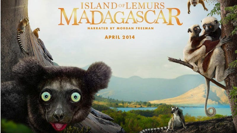 IMAX's Island of Lemurs Is A Fun, Balanced Nature Documentary