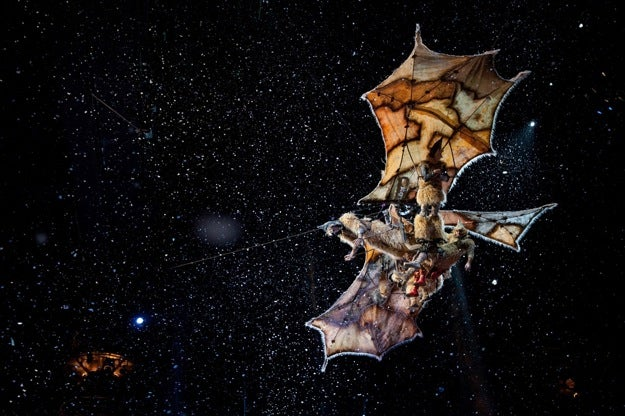 Cirque Du Soleil: Worlds Away 3D Images