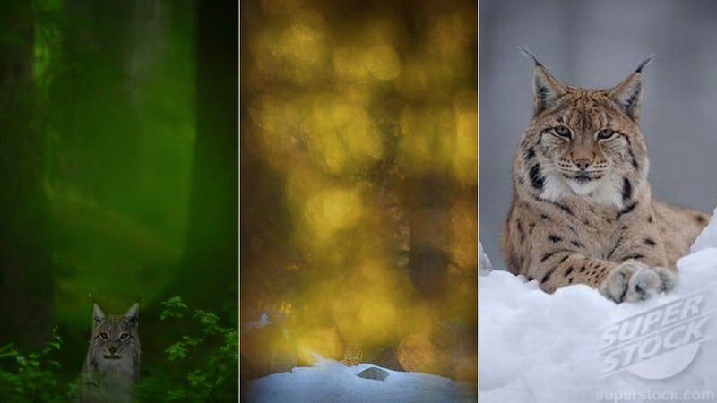 Swedish Nature Photographer Exposed as Giant Photoshopping Fraud