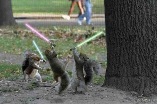 Squirrels and Kittens Battle for the Future of the Galaxy