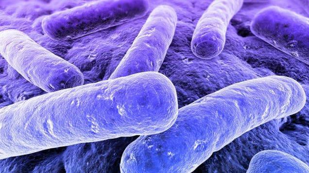 A Medieval Recipe Could Kill Hospital Superbugs. No, Really.xa0;