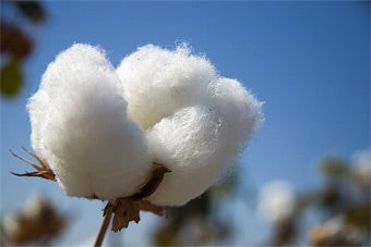 Kill King Cotton For the USA