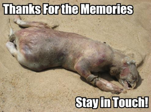 The 2008 Montauk Monster Yearbook