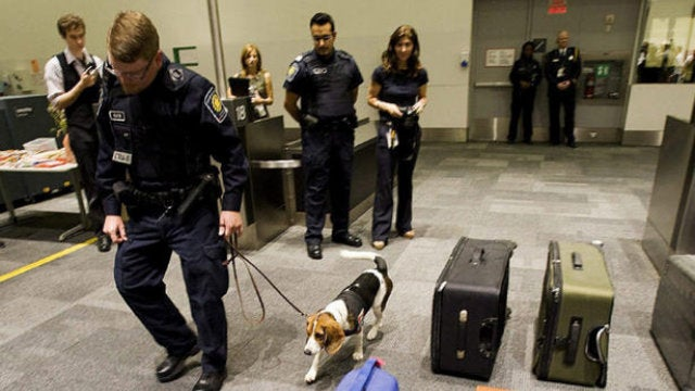 Adopting a Money-Sniffing Border Patrol Beagle Seems Like a Prudent Investment, Right?