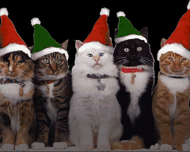 Happy Cat-Mas