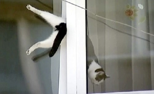 Video: Man Rescues Cat Stuck In Window