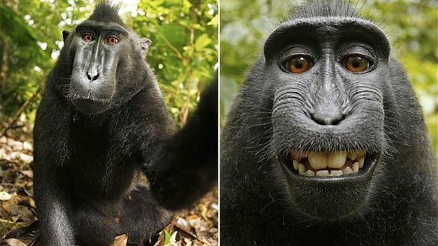 Vain Monkey Steals Cam to Take These Adorable Self-Portraits