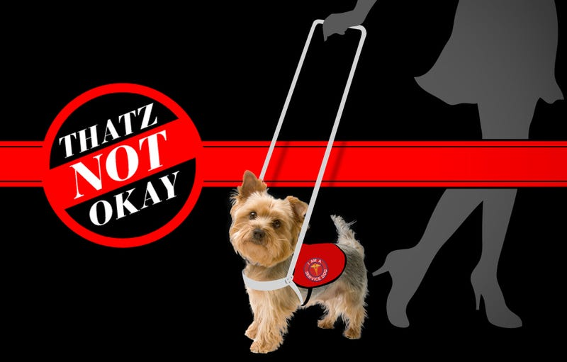 Thatz Not Okay: Can I Pretend I Need a Service Dog?