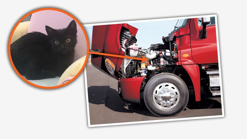 Tough Kitty Survives 300 Mile Trip In Truck Engine Compartment