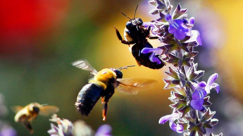 Some Bees Are Natural Thrill-Seekers