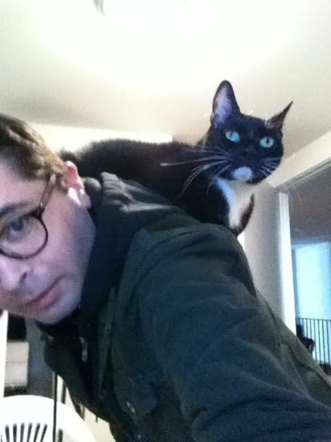 This Cat Won't Stop Sitting on My Shoulder Like a Parrot