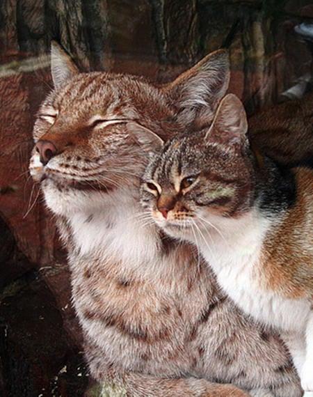 WTF; Cat breaks into Zoo...makes a friend...