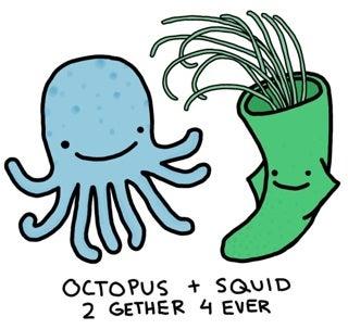 The Secret Sex Lives Of Squid