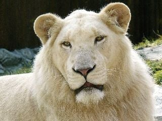 Why Albino Animals Aren't Always White (And Non-Albino Animals Are)