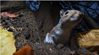 Nature's Candids: The Best Wildlife Camera-Trap Photography Of 2014
