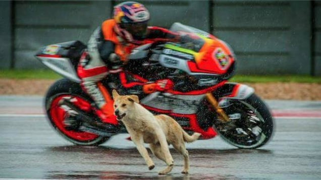 Dog Who Interrupted MotoGP Practice Session Has Found A Loving Home