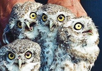 Owls In Danger, Thanks To Magic & Harry Potter