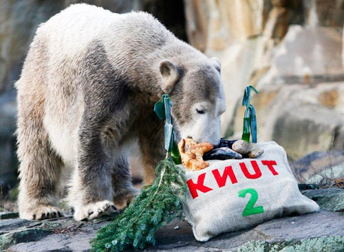 Is Knut Nuts?
