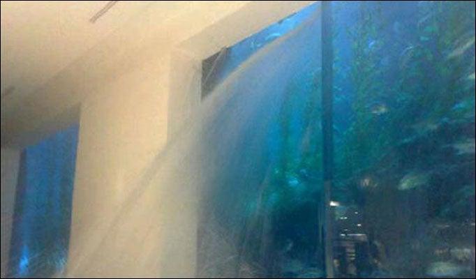 Dubai's 2 Million Gallon Shark Tank Is Leaking