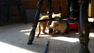 11 Things I Did Not Know About Kittens