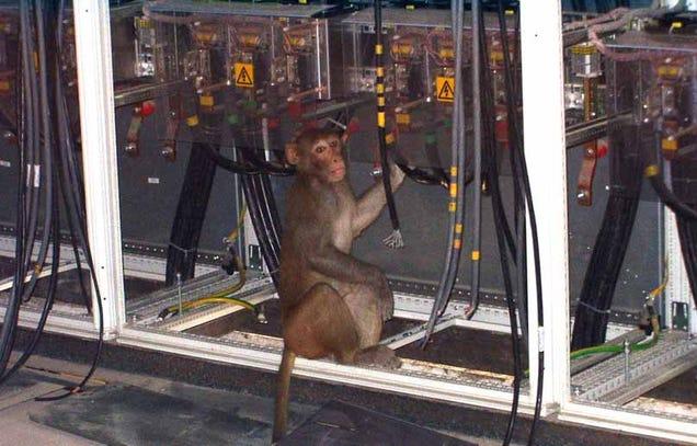 Caption Contest: Revenge of the Monkey Wrench