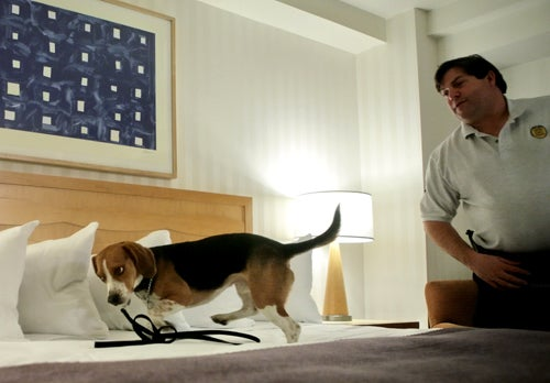 NYC Wants to Buy Bedbug-Sniffing Dogs