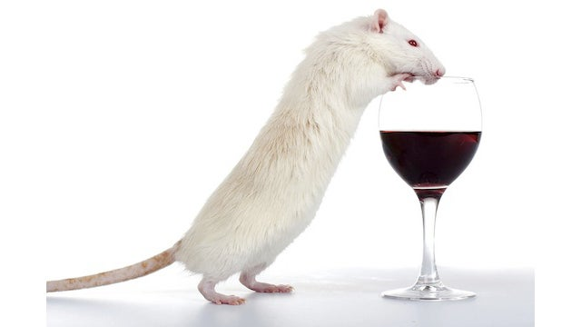 Wine pairings for the post-apocalypse: What to drink with rats, dog food, and more