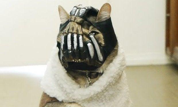 Canadian Bane Cat