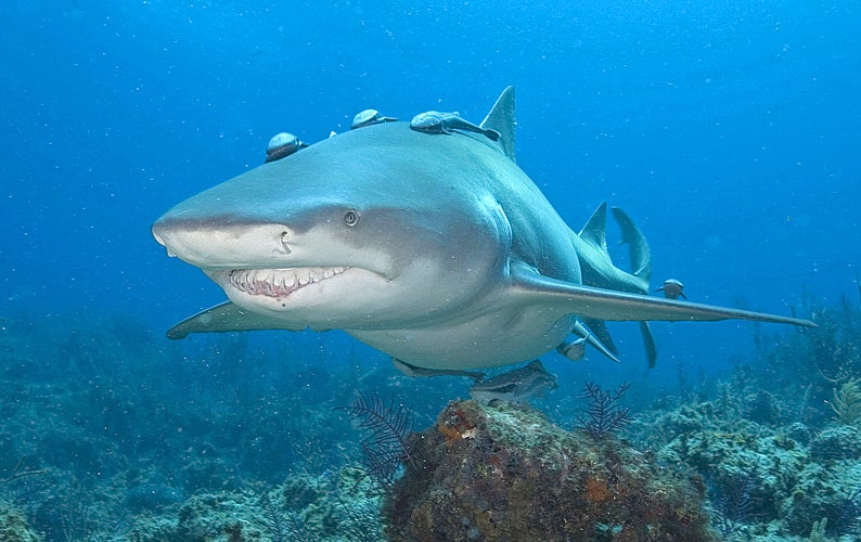 Shark Attacks Let'sGoDigital Reporter as She Reviews Underwater Cameras in the Bahamas