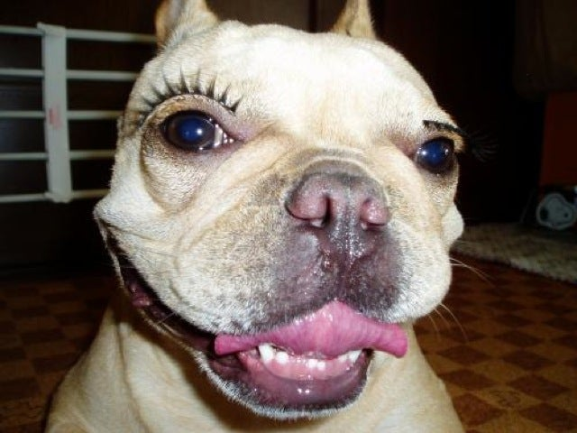 Fake Eyelashes on Pets Might Be a Thing