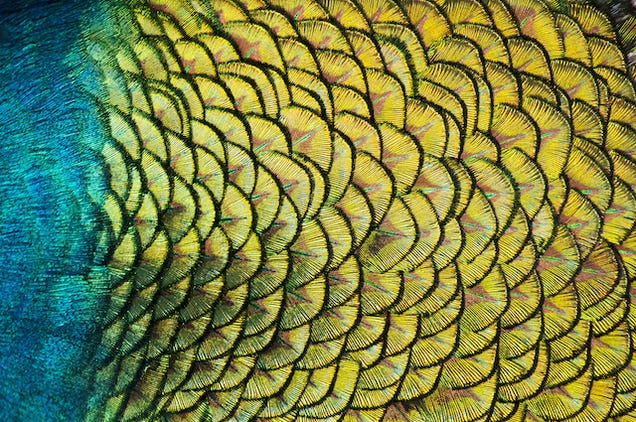 Diez bellísimos ejemplos de fractales en la naturaleza