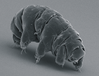 Frozen Tardigrade Brought Back to Life After 30 Years