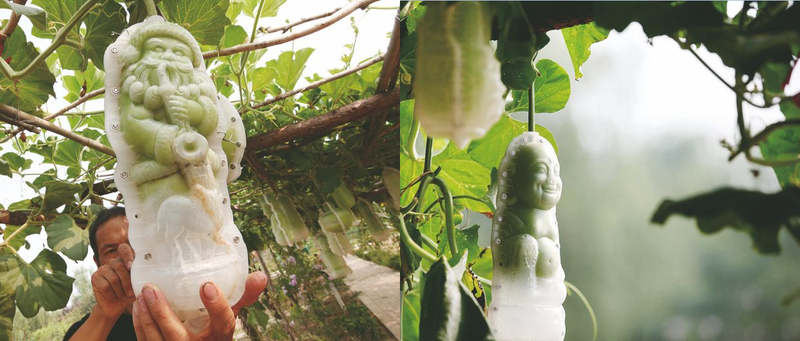 Chairman Mao-Shaped Fruit Are Being Grown in China