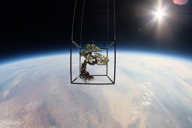 In the Ultimate in Installation Pieces, Artist Sends Plants Into Space