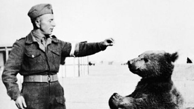Remembering Private Wojtek, the soldier-bear who fought in World War II