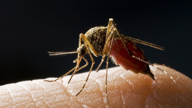 The West Nile Virus Is Having a Banner Year
